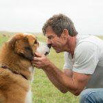 ONG planeja constranger quem for assistir Quatro Vidas de Um Cachorro