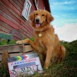 Produtor de Quatro Vidas de um Cachorro contra-ataca e denuncia manipulação da Peta