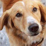 Vídeo de maus tratos de Quatro Vidas de um Cachorro vai parar na Justiça