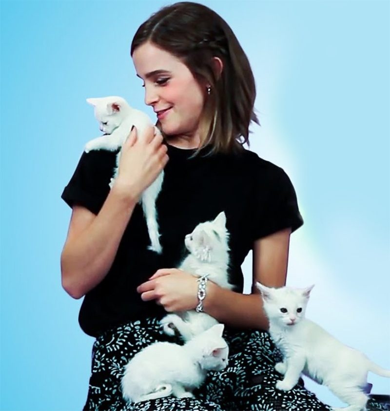 Emma Watson se derrete em entrevista repleta de gatinhos