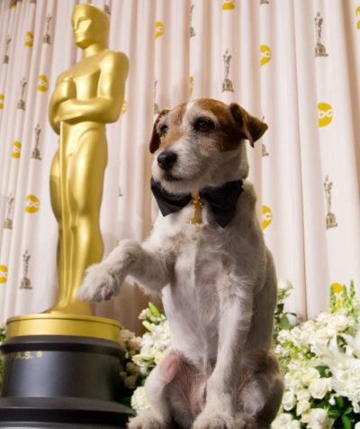 Cachorro de O Artista é eleito melhor astro canino da história do Festival de Cannes